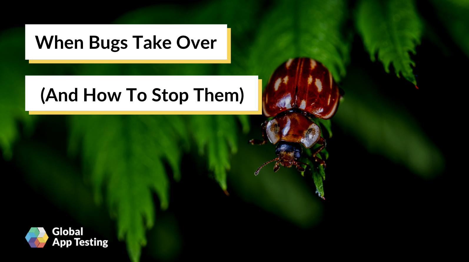 Stop Software Bugs